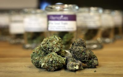 """Cannabis. Risoluzione PD-SEL: """"Si a legalizzazione, ERVET studi impatto in Regione"""""""