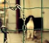 catena animali