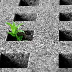 Consumo di suolo. Risoluzione per rivedere la normativa regionale
