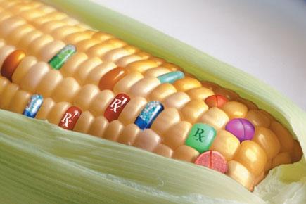 "Agricoltura. Risoluzione PD: ""No agli OGM senza garanzie per salvaguardia colture tradizionali e biologiche"""