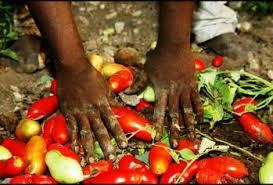 20.02.14 Foggia. Convegno sulle politiche e i diritti del lavoro migrante in Puglia e in Italia