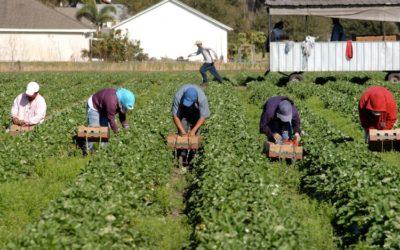 I nuovi schiavi e il diritto alla regolarizzazione